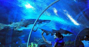 آکواریوم لنکاوی، تونلی به عمق اقیانوس
