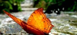پارک پروانه ها در کوالالامپور