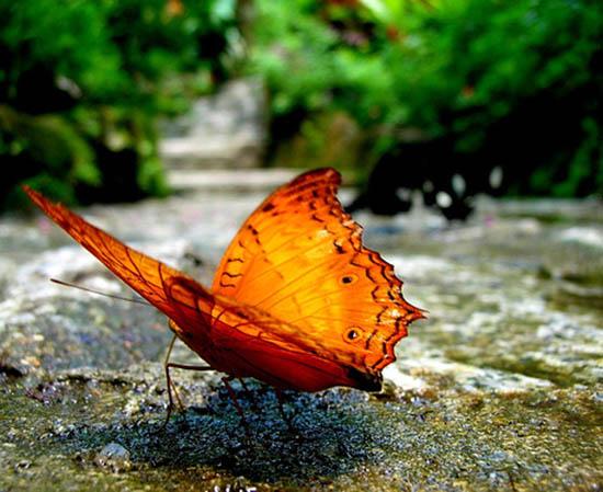 پارک پروانه ها