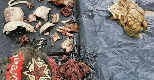 بقایای جسد پسر ۱۴ ساله از شکم کروکودیل کشف شد