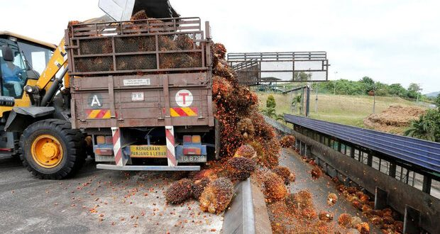 مالزی۲۵درصد درآمدروغن پالم رابدلیل کمبود کارگر از دست میدهد
