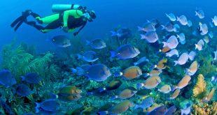جزیره پریهای دریایی در مالزی، بهشت غواص هاست