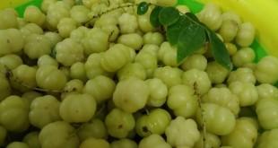 انگور مالزیایی میوه ناشناخته