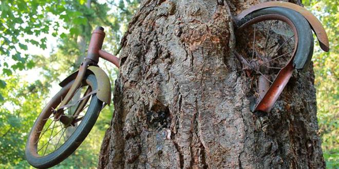 داستان واقعی دوچرخه ای که داخل تنه یک درخت رشد کرده!