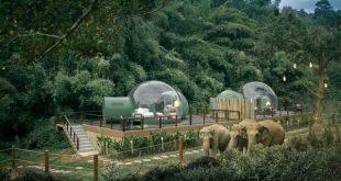 راه اندازی هتل جنگلی برای همنشینی با فیلها در تایلند