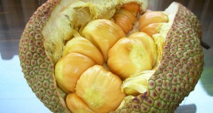 چمبداک میوه شیرین و چسبناک مالزی