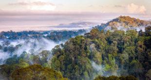 سافاری در بورنئو، تلفیق طبیعت زیبا و حیات وحش غنی