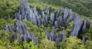پارک ملی گونونگ مولو؛ جاذبهای خارقالعاده در مالزی که نمیشناسید