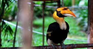 جانوران شگفتانگیز در پارک ملی مالزی