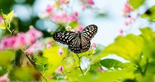 گردشگری مالزی: پارک پروانه ها کوالالامپور