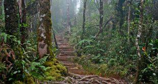 پارک ملی کینابالو طبیعتی زیبا و بکر در مالزی