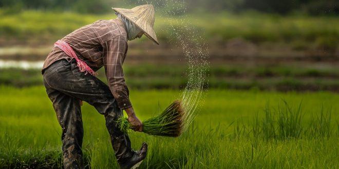 برنامه دولت مالزی برای کمک به کشاورزان جوان با اعطای کمک مالی برای تولید محصولات کشاورزی