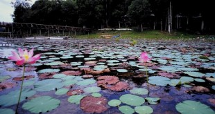 زیر این دریاچه آرام اژدهایی خفته است (اسطورهها و افسانههای عاشقانه در گردشگری مالزی)