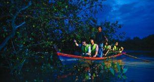 پارک فایرفلای مالزی (کرم های شبتاب در جنگل مرطوب)