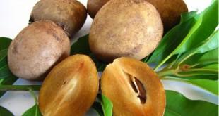 """معرفی یک میوه استوایی با نام """" چیکو """" با خواص ضد سرطانی"""