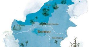 جنگلهای بارانی بورنئو؛ محل رویش غولپیکرترین گلهای جهان