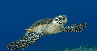 گورستان لاکپشت ها در جزیره سیپادان