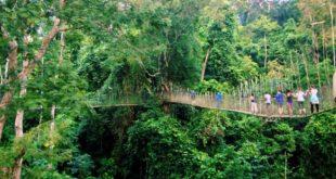 پل پارک ملی تامان نگارا(Taman Negara)، مالزی