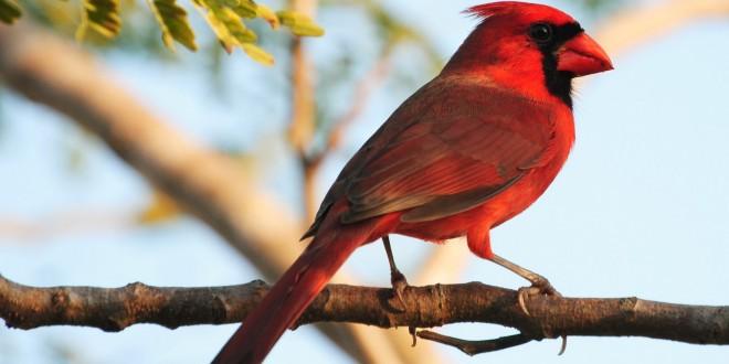 آیا میدانید که چرا پای پرندگان صاف نیست؟